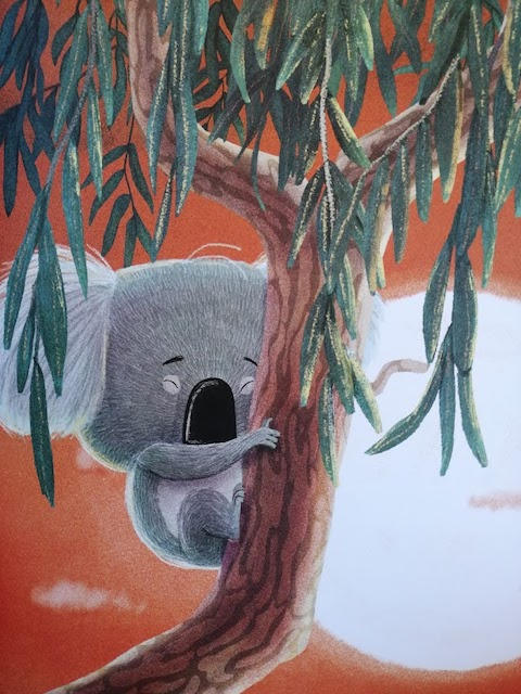 koala na stablu