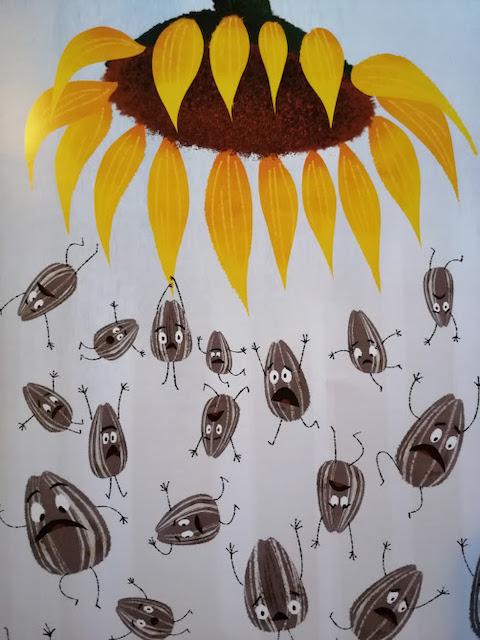 sjemenke padaju sa suncokreta